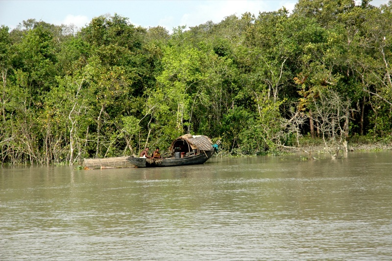 The world's largest delta of Sundarbans has been declared as a UNESCO World Heritage site. Pic for representational purpose only.